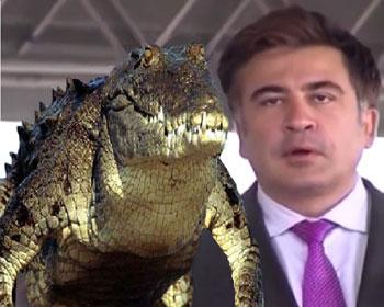 krokodilov-net-video-porno-foto-porno-parney-golie